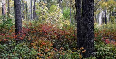 Fall Foliage Art Print by Debby Pueschel