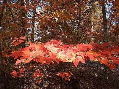 Photograph - Fall Foliage by Deborah Lacoste