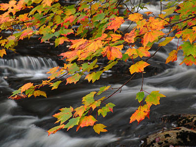 Fall Foliage In Acadia National Park  Print by Juergen Roth