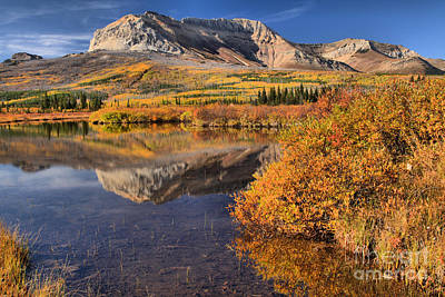 Photograph - Fall Foliage In Alberta by Adam Jewell