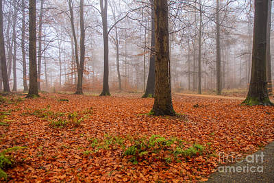 Vintage Signs - Fall foliage in foggy forest by Patricia Hofmeester