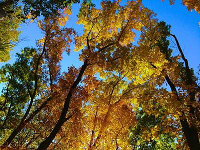 Photograph - Fall Foliage In Redding by Polly Castor