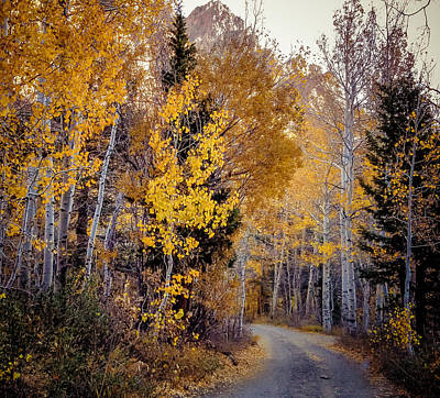 Photograph - Fall Foliage Inlundy Canyon Road by Jerome Obille