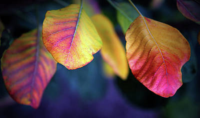 Photograph - Fall Foliage by Jessica Jenney