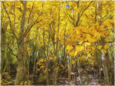 Photograph - Fall Foliage by Jonathan Nguyen