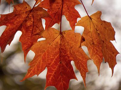 Photograph - Fall Foliage by Kimberly Mackowski