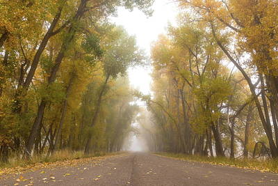 Photograph - Fall Foliage Lines A Foggy Road by Tony Hake