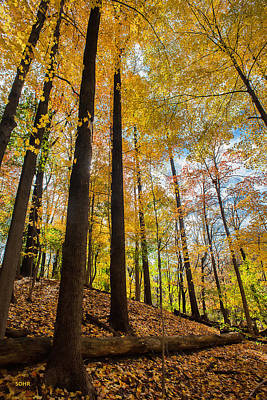 Photograph - Fall Foliage - Patapsco River Valley by Dana Sohr