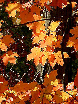 Painting - Fall Foliage by Paul Sachtleben