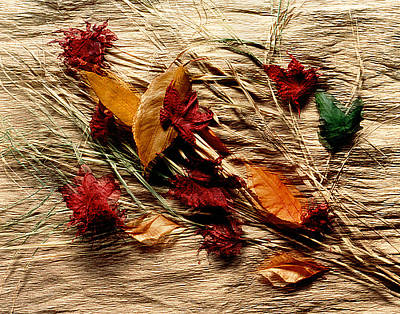 Photograph - Fall Foliage Still Life by Roger Bester