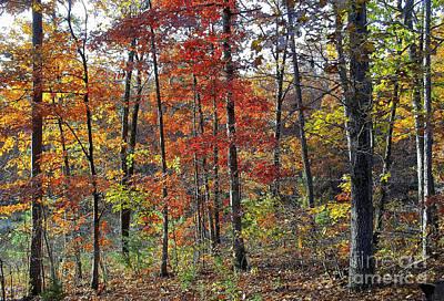 Photograph - Fall Foliage  by Tom Conboy
