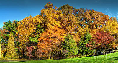 Photograph - Fall Foliage Trees Beautiful  by David Zanzinger