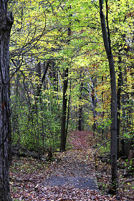 Photograph - Fall Forest 1 110417 by Mary Bedy