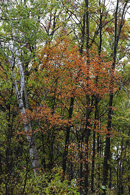 Photograph - Fall Forest 4 110417 by Mary Bedy