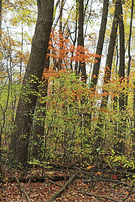 Photograph - Fall Forest 5 110417 by Mary Bedy