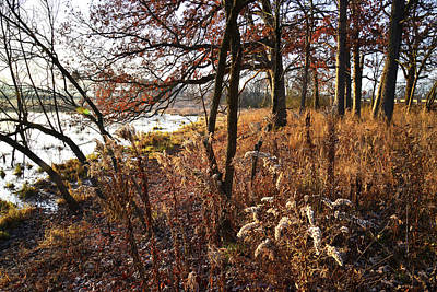 Photograph - Fall Forest And Wetland In Glacial Park by Ray Mathis