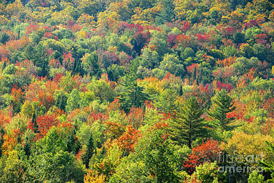 Fall Forest Art Print by David Lee Thompson