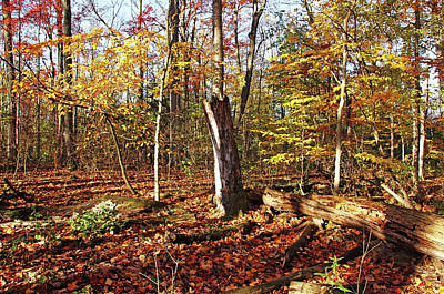 Photograph - Fall Forest by Debbie Oppermann