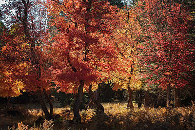 Photograph - Fall Forest Magic  by Saija Lehtonen