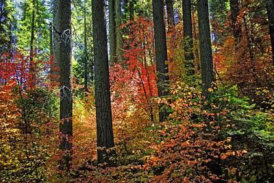 Photograph - Fall Forest Splendor by Lynn Bauer