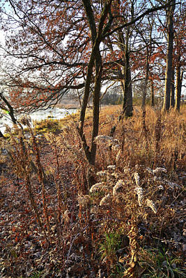 Photograph - Fall Forest Wildflowers In Glacial Park by Ray Mathis