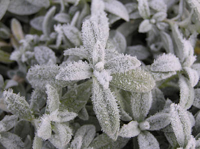 Fall Frost On Plants Art Print by Richard Mitchell