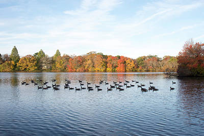 Belmont Lake State Park Wall Art - Photograph - Fall Gaggle At Belmont by Joan D Squared Photography