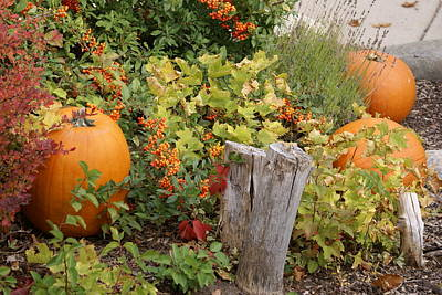 Photograph - Fall Garden by Cynthia Powell