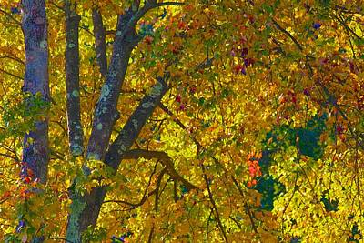 Photograph - Fall Glory On Route 53 by Polly Castor