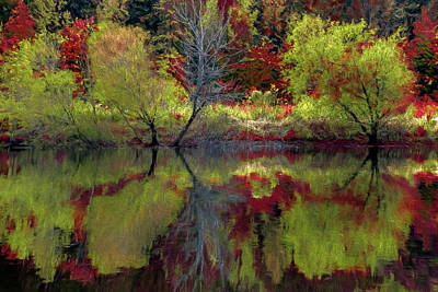 Photograph - Fall Gone Wild by Jerry Gammon