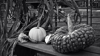 Photograph - Fall Gourds by George Taylor