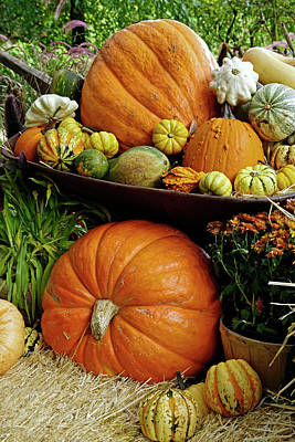 Photograph - Fall Gourds by Inge Riis McDonald