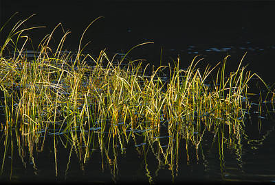 Photograph - Fall Grasses - Snake River by Sandra Bronstein