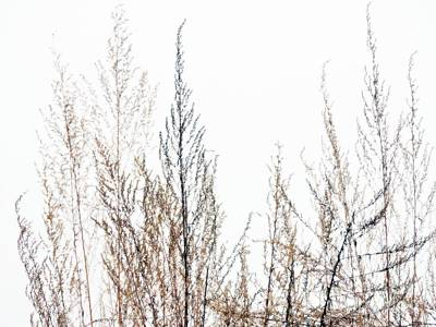 Photograph - Fall Grasses by Marcia Lee Jones