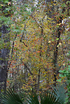 Photograph - Fall Hangs On Out In The Woods by rd Erickson