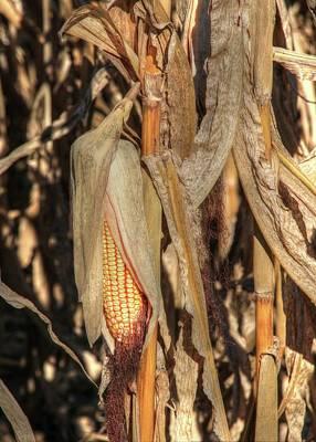 Photograph - Fall Harvest Awaits by J Laughlin