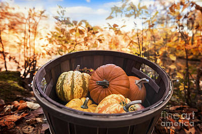 Photograph - Fall Harvest Basket by Alissa Beth Photography