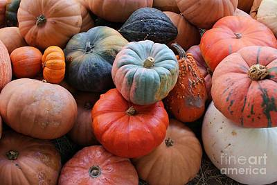 Natural White For Decorating Photograph - Fall Harvest by Robert Wilder Jr