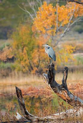 Photograph - Fall Heron by Loree Johnson