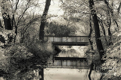 Photograph - Fall In Black And White by CJ Benson