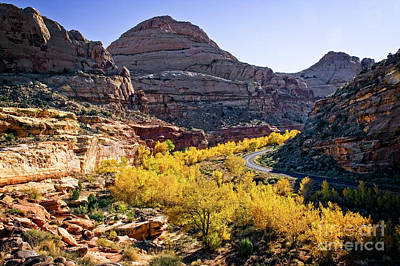 Photograph - Fall In Capital Reef by Scott Kemper