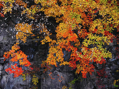 Photograph - Fall In Color by Hyuntae Kim
