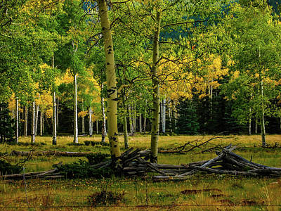 Photograph - Fall In Colorado by Elijah Knight