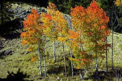 Beers On Tap - Fall In Colorado by Marty Koch