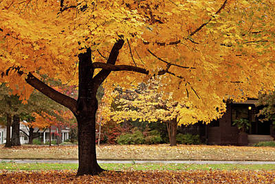 Photograph - Fall In Downtown Conway by Eilish Palmer