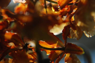 Photograph - Fall In It's Glory by Renee Holder