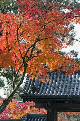 Fall In Japan Art Print