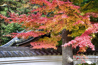 Photograph - Fall In Japan by Tad Kanazaki