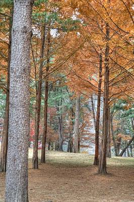 Photograph - Fall In Korea by Bill Hamilton