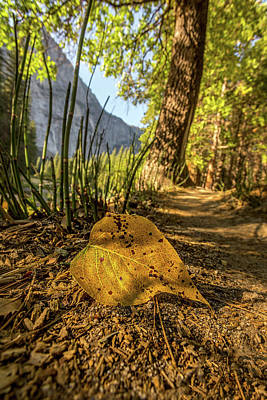 Photograph - Fall In Leaf by Peter Tellone